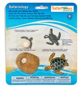 Safariology, The Life Cycle of a Green Sea Turtle