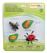 Safariology, The Life Cycle of a Ladybug