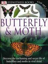 DK Eyewitness Books: Butterfly and Moth