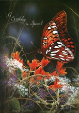 Birthday Cards, Butterfly, Pack of 36