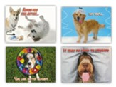 Heal, Get Well Cards, Box of 12
