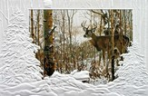 Lone Buck, Live In Harmony and Peace Cards, Box of 16