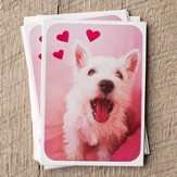 Fluffy Puppy Packaged Valentine Cards