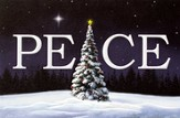 Tree of Peace Cards, Box of 16