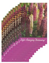 Life's Amazing Discovery - pamphlet - pack of 10