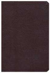 NIV Archaeological Study Bible, Bonded Leather Burgundy  1984