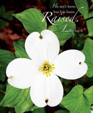 Raised Easter Dogwood Bulletin 2013, Large (Package of 50)