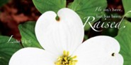 Raised Easter Dogwood Offering Envelope 2013 (Package of 50)