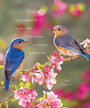 Birds Spring Bulletins, Large (Package of 50)