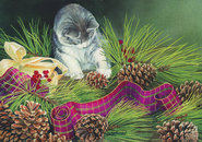 Kitten and Pine Cones Card, Box of 16  -              By: Susan Bourdet