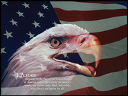 Eagle and Flag Mounted Canvas Print  -