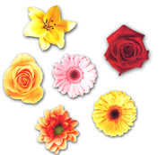Spring Flowers Bulletin Board Accent  -