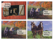 Horsepower Birthday Cards, Box of 12  -