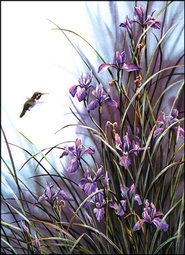 Wild Garden Hummingbird Thank You Notes, Box of 15  -     By: Susan Bourdet