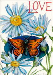 Butterflies Get Well Cards, Box of 12  -
