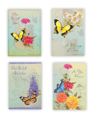 Butterflies Get Well Cards, Box of 12  -     By: Sandy Clough