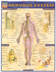 Nervous System, QuickStudy &#174 Chart   -     By: Homeschool
