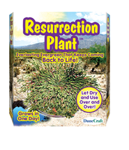 Resurrection Plant  -