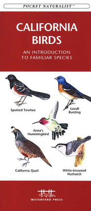 California Birds   -