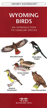 Wyoming Birds   -