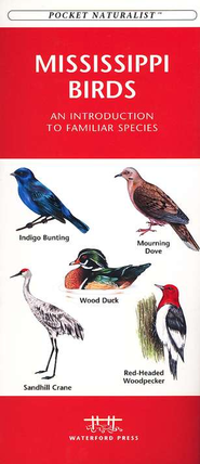 Mississippi Birds   -