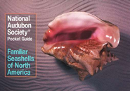 The Audubon Society Pocket Guide to Familiar Seashells of North America   -     By: Audubon Society, Harold A. Rehder