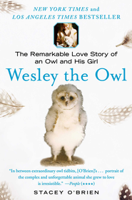 Wesley the Owl: The Remarkable Love Story of an Owl and His Girl - eBook  -     By: Stacey O'Brien