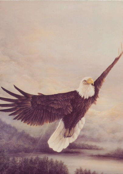 Eagle's Wings Birthday Cards, Box of 12