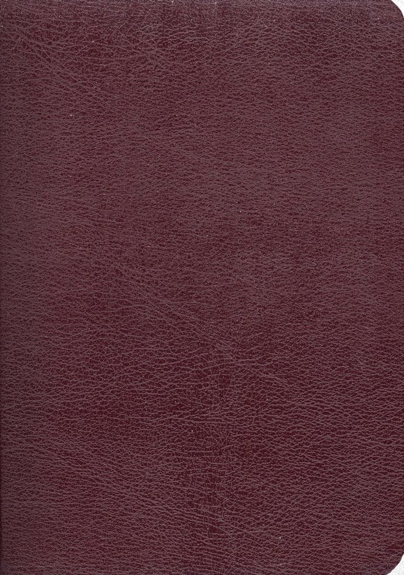 Joyce Meyers' Everyday Life Bible Bonded Leather, Burgundy
