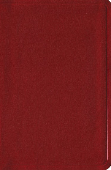 Biblia &#161Colormax! RVR 1960, Granate Radiante  (RVR 1960 Colormax! Youth Bible, Red)