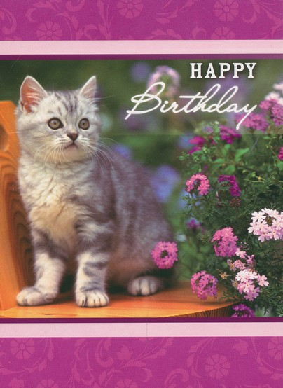 Animals Birthday Cards, Box of 12