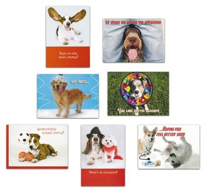Pets, Assorted Birthday and Get Well Cards, Box of 32  -     By: Pam Marks