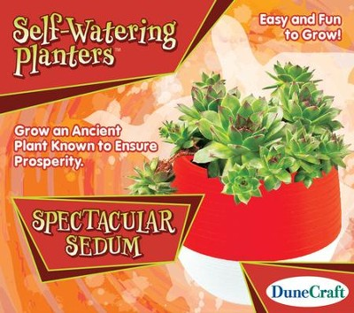 Spectacular Sedum, Self-Watering Planter  -