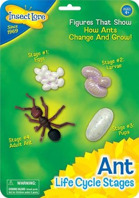 Ant Life Cycle Stages Figurines  -