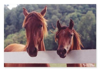 Horse Corral Jigsaw Puzzle, 100 Pieces  -