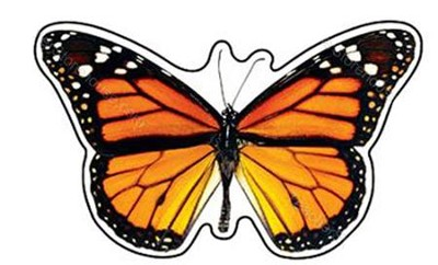 Monarch Butterfly Discovery Mini Classic Accents Pack of 36  -