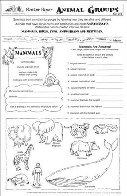 Animal Groups Poster Paper (pack of 30)  -