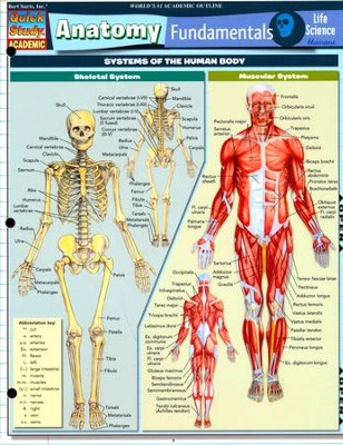Anatomy Fundamentals: Life Science, Laminated Guide  -     By: Vincent Perez