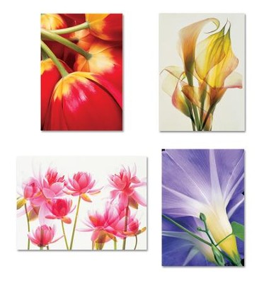 Blank Floral Cards, Box of 12  -     By: Randall Shedd