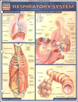 Respiratory System, QuickStudy &#174 Chart   -     By: Homeschool
