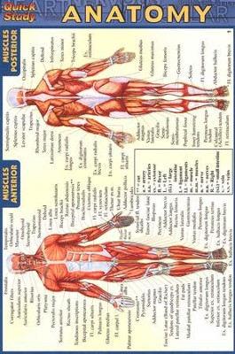 Anatomy, QuickStudy &#174 Pocket Guide     -