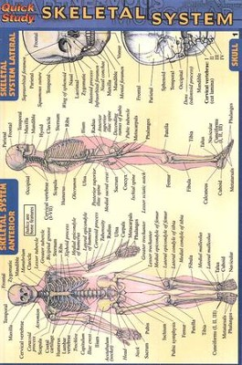 Skeletal System, QuickStudy &#174 Pocket Guide     -