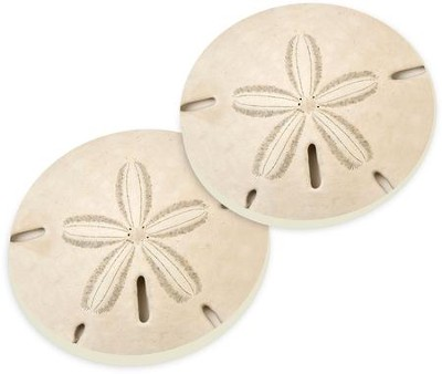 Sand Dollar Car Coasters, Set of 2  -