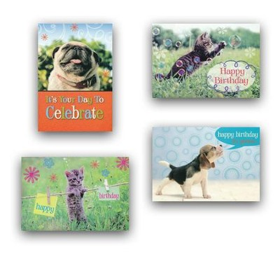 Furry Friends, Birthday Cards, Box of 12  -