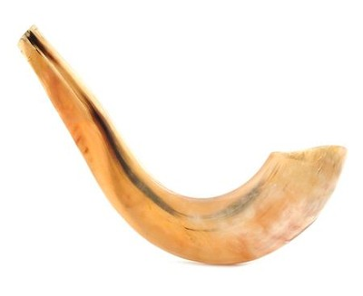 Deluxe Polished Ram's Horn Shofar: 16 to 18 inches  -     By: Amanacore