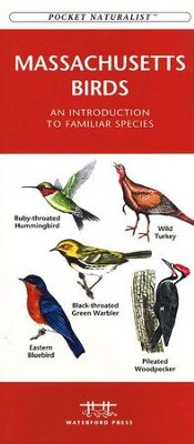 Massachusetts Birds   -