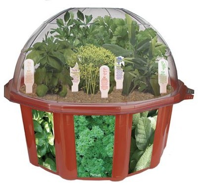 Herb Garden, Edible Dome Terrarium  -
