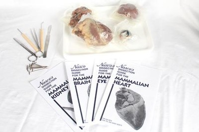Mammal Organs Dissection Kit   -