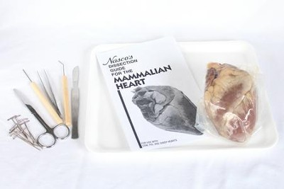 Sheep Heart Dissection Kit   -