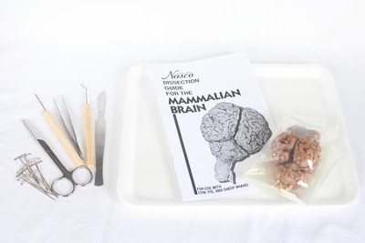 Sheep Brain Dissection Kit   -